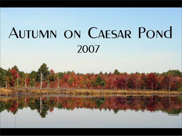 """AUTUMN ON CAESAR PoNd 2007  . -_ . _._ ( .  1 4 2  . . .  CL, ' . ~': ' 0. .  ,—. ._'H'-_*, :'. ;'.  'a . ':¢*""""_v. '- """"'. ..."""