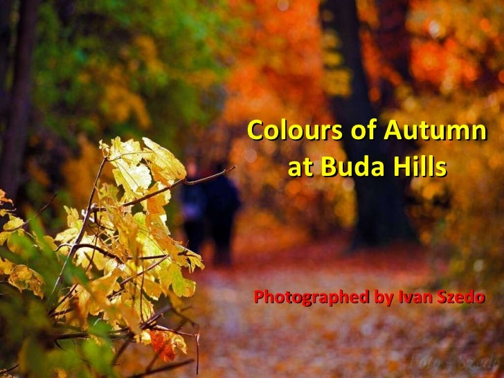 Colours of Autumn at Buda Hills Photographed by Ivan Szedo