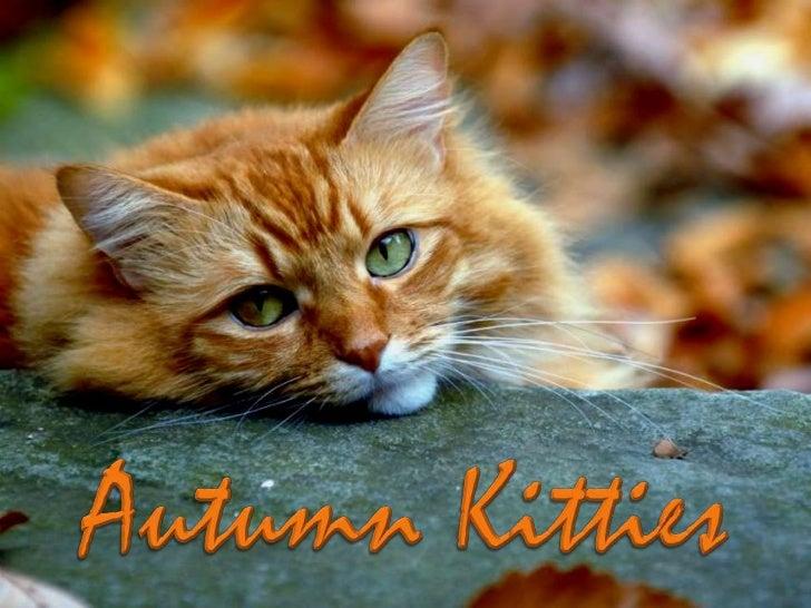 AUTUMN  KITTIES