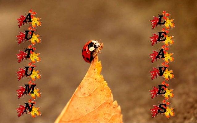 http://judy-faunaflora.blogspot.com http://www.ppsparadicsom.net
