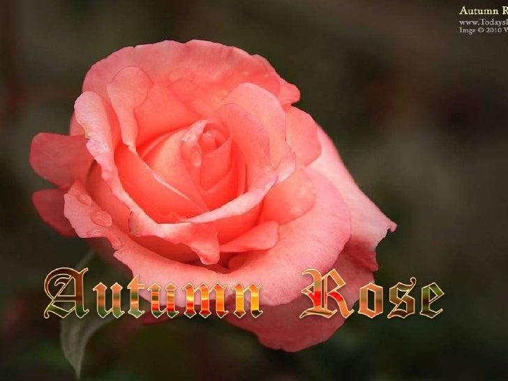 Autumn Rose Slide 1