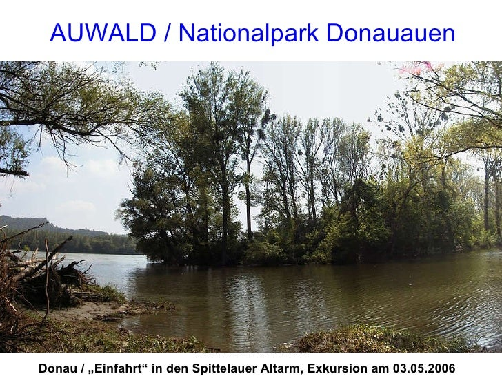 "AUWALD / Nationalpark Donauauen Donau / ""Einfahrt"" in den Spittelauer Altarm, Exkursion am 03.05.2006"