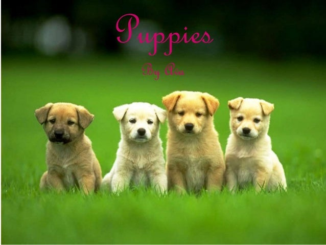 Puppies By Ava
