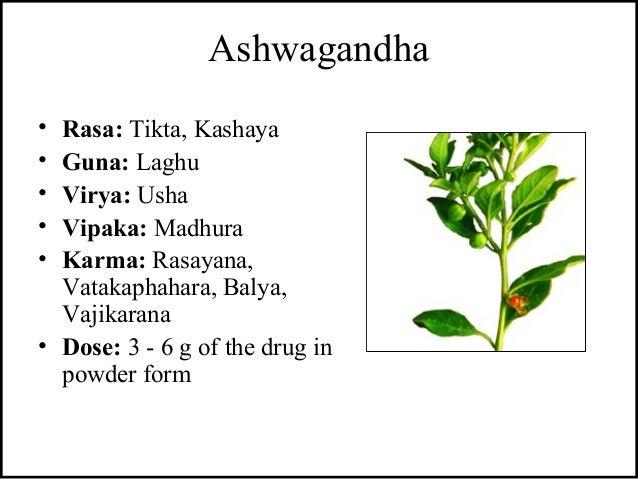 Ashwagandha • Rasa: Tikta, Kashaya • Guna: Laghu • Virya: Usha • Vipaka: Madhura • Karma: Rasayana, Vatakaphahara, Balya, ...