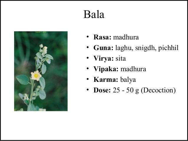 Bala • Rasa: madhura • Guna: laghu, snigdh, pichhil • Virya: sita • Vipaka: madhura • Karma: balya • Dose: 25 - 50 g (Deco...