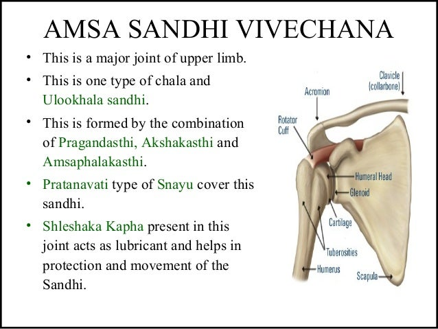 AMSA SANDHI VIVECHANA • This is a major joint of upper limb. • This is one type of chala and Ulookhala sandhi. • This is f...