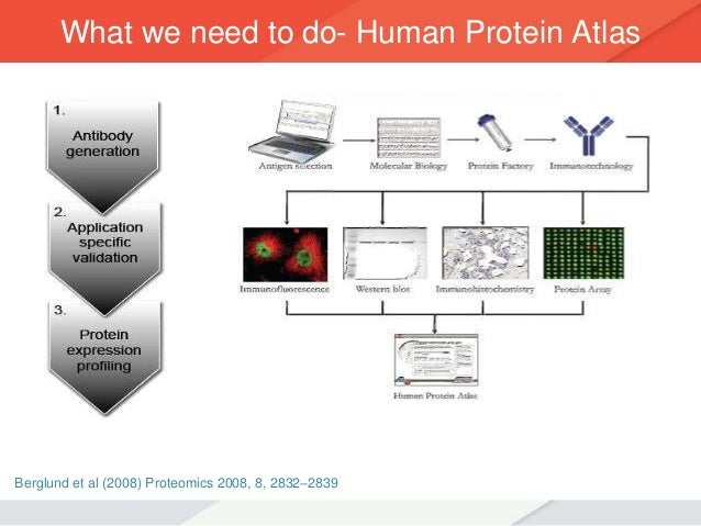 Avacta Life Sciences Affimers Presentation Global Protein Engineering Summit Pegs 638 Cb