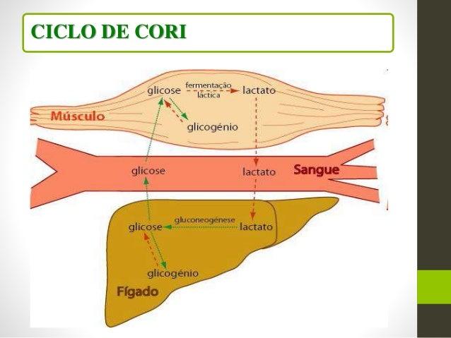 Metodologia Direta Dosagem Plasmática do ACIDO LÁTICO Método Floroclorimétrico Método Enzimático Depleção do Glicogénio po...