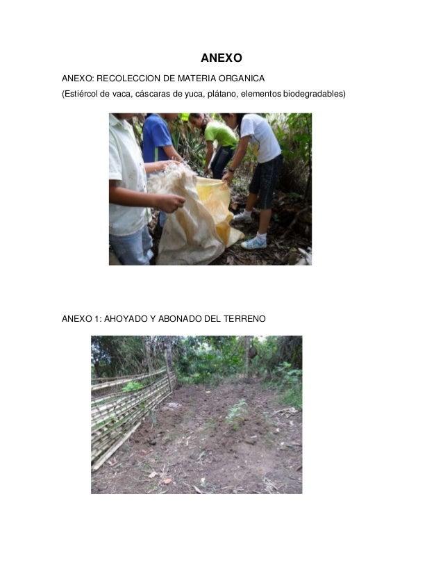 ANEXOANEXO: RECOLECCION DE MATERIA ORGANICA(Estiércol de vaca, cáscaras de yuca, plátano, elementos biodegradables)ANEXO 1...