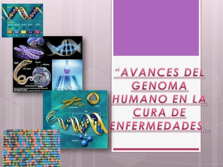 El  genoma   humano es  lasecuencia de ADN de un serhumano   Está dividido en fragmentos que   conforman los 23 pares de  ...