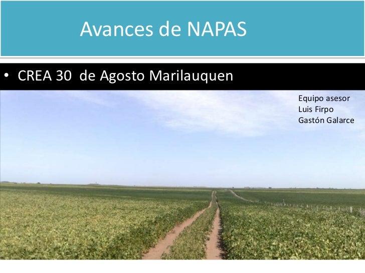 Avances de NAPAS                                   <br />CREA 30  de Agosto Marilauquen <br />Equipo asesor...