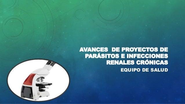 AVANCES DE PROYECTOS DE PARÁSITOS E INFECCIONES RENALES CRÓNICAS EQUIPO DE SALUD