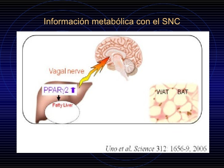 Avances en la fisiopatologia de la Diabetes Mellitus tipo 2