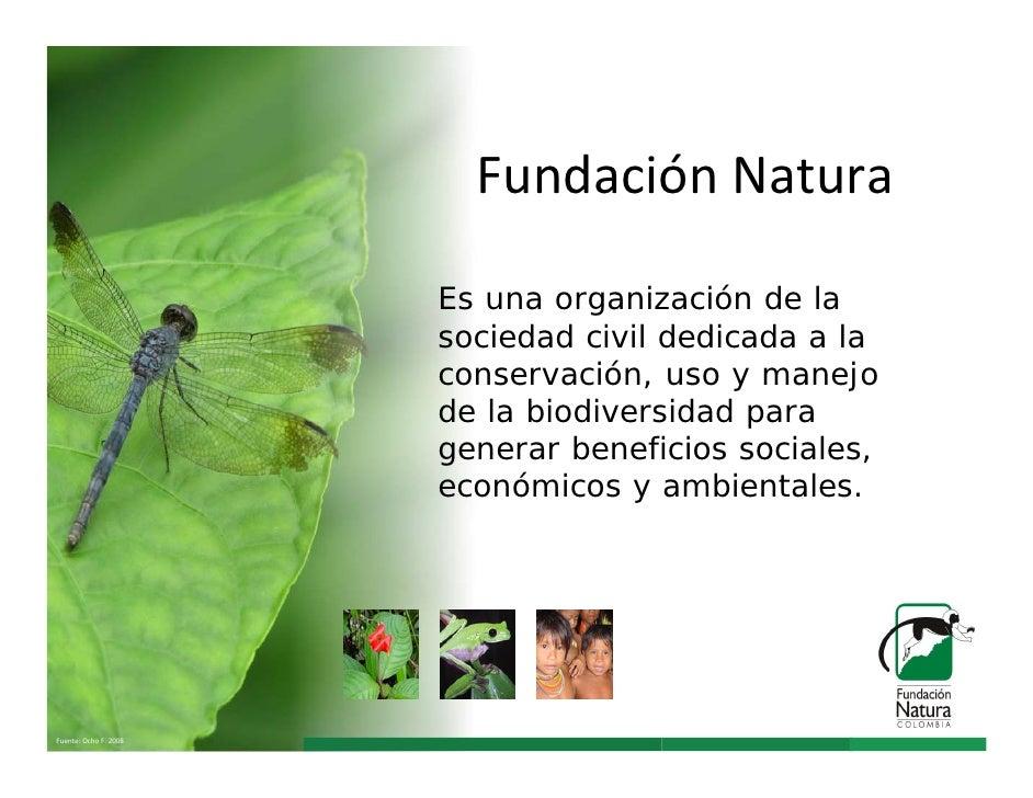 FundaciónNatura                       Es una organización de la                       sociedad civil dedicada a la       ...