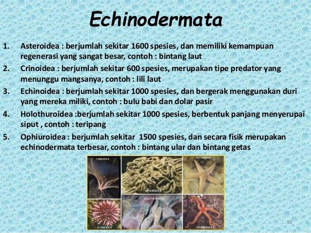 840 Koleksi Gambar Kelompok Hewan Echinodermata HD Terbaik
