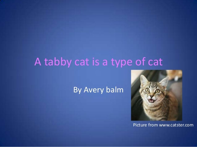 A tabby cat is a type of catBy Avery balmPicture from www.catster.com