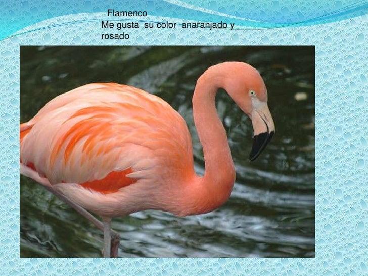 Flamenco<br />Me gusta  su color  anaranjado y rosado<br />