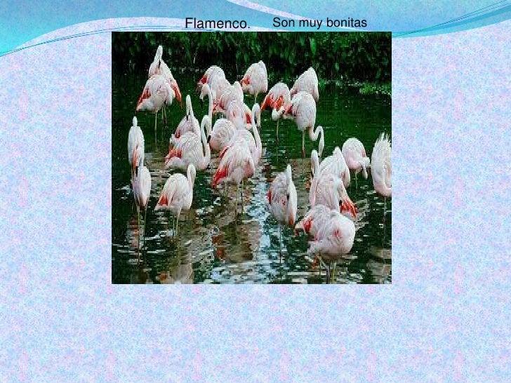 Flamenco.<br />Son muy bonitas<br />