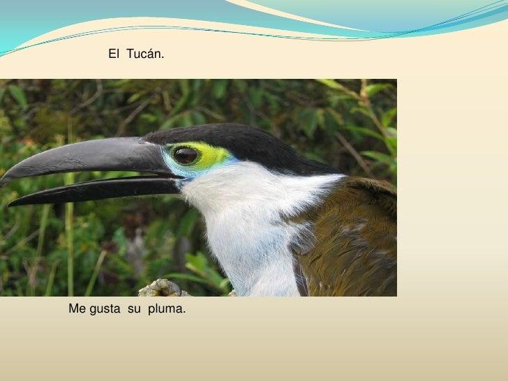 El  Tucán.<br />Me gusta  su  pluma.<br />