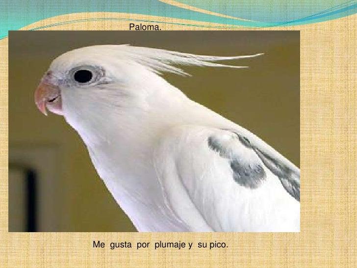 Paloma.  <br />Me  gusta  por  plumaje y  su pico.<br />