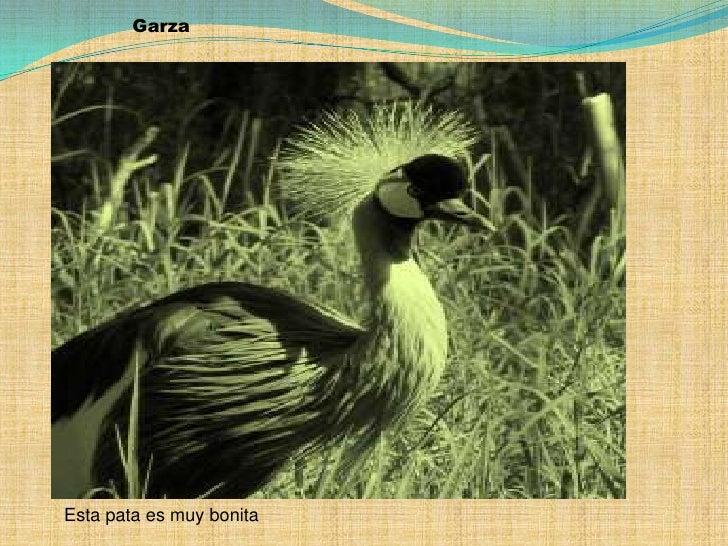 Garza<br />Esta pata es muy bonita<br />