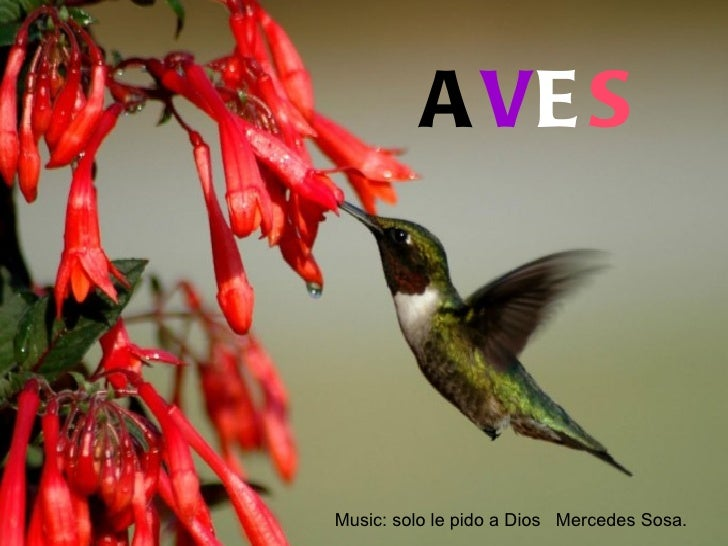A VE S JFGTMusic: solo le pido a Dios Mercedes Sosa.