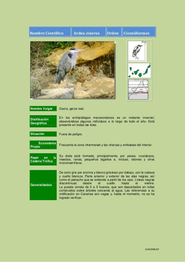 Nombre Científico  Ardea cinerea  Orden  Ciconiiformes  Nombre Vulgar  Garza, garza real.  Distribución Geográfica  En los...