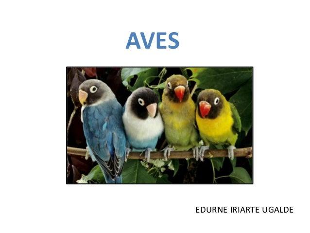 AVES  EDURNE IRIARTE UGALDE