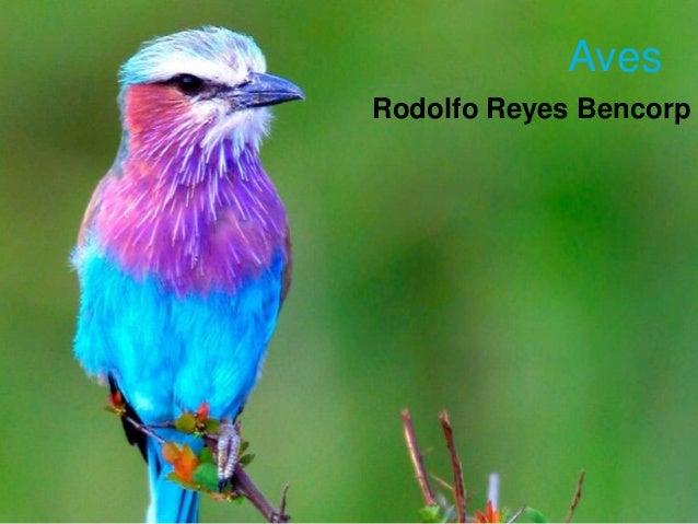Aves Rodolfo Reyes Bencorp