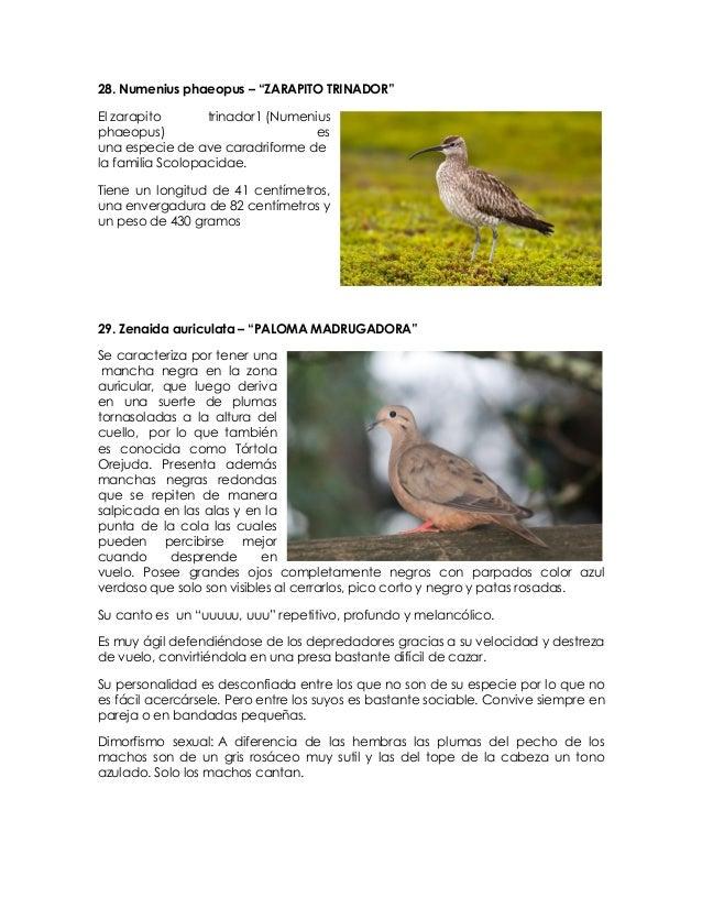 Descargar El Canto Del Gargantillo Free Download