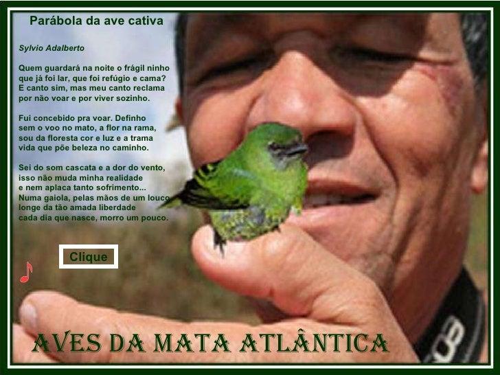 Aves da Mata Atlântica Parábola da ave cativa  Sylvio Adalberto Quem guardará na noite o frágil ninho que já foi lar, que ...