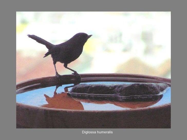 Aves de mi jardin espa ol english for Aves de jardin