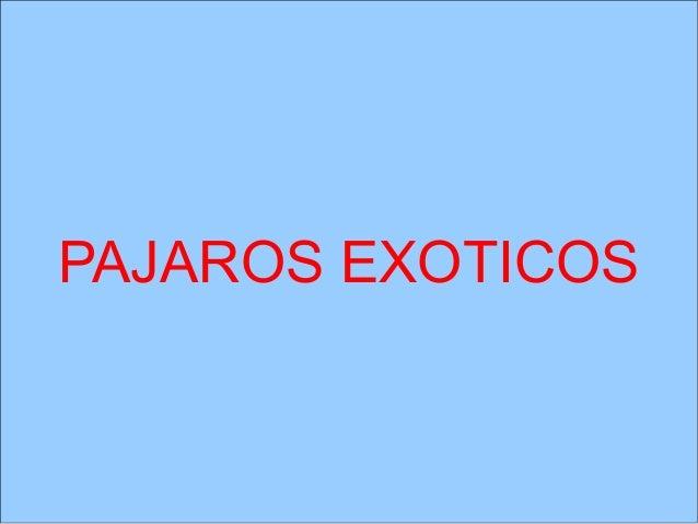 Pajaros EXOTICOSPAJAROS  exoticos