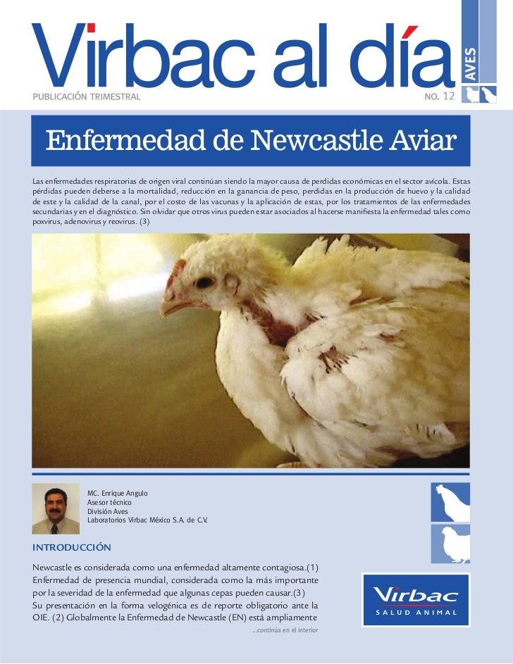Enfermedad de Newcastle AviarLas enfermedades respiratorias de origen viral continúan siendo la mayor causa de perdidas ec...