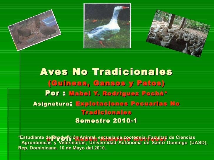 Aves No Tradicionales (Guineas, Gansos y Patos) Por :  Mabel Y. Rodríguez Poché * Asignatura :  Explotaciones Pecuarias No...