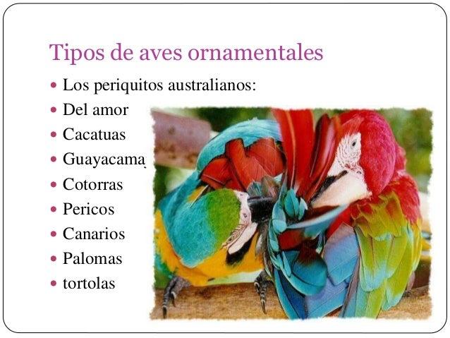 Aves ornamentales for Clases de plantas ornamentales