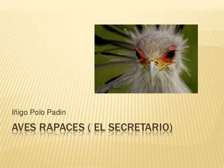 Iñigo Polo PadinAVES RAPACES ( EL SECRETARIO)