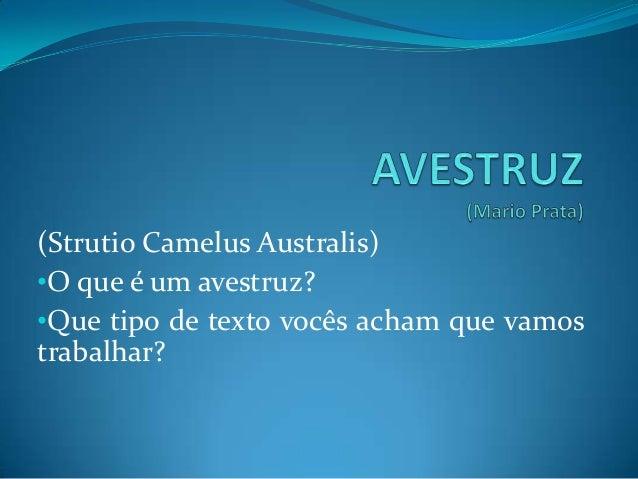 (Strutio Camelus Australis)•O que é um avestruz?•Que tipo de texto vocês acham que vamostrabalhar?