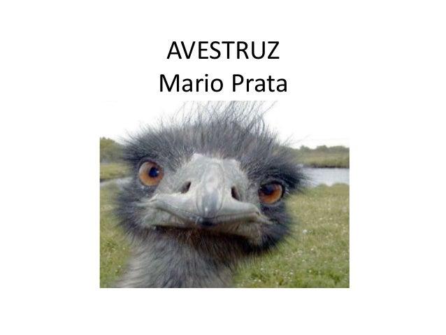 AVESTRUZMario Prata