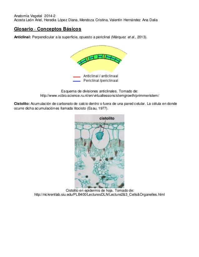 Anatomía vegetal Glosario 1 conceptos básicos