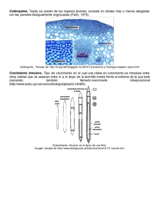 Anatomía vegetal Glosario 2 tejidos