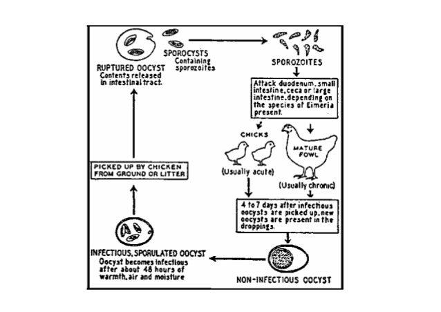 ثانيا-العالجية الوقاية Chemoprophylaxis و آ ا ا ا ت ا ل ا: ١-البيولوجية العلفية األضافات:ر...