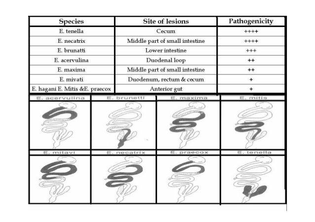 وشدته المرض لحدوث المھيئة العوامل ٥-ا ا Factors related to the nutrition ٦-اـ Factors related to the dis...