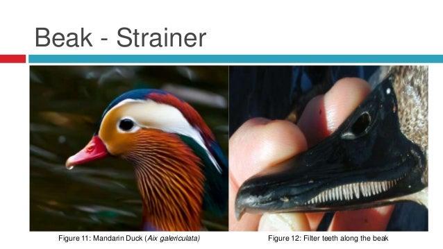 Avian Digestive System