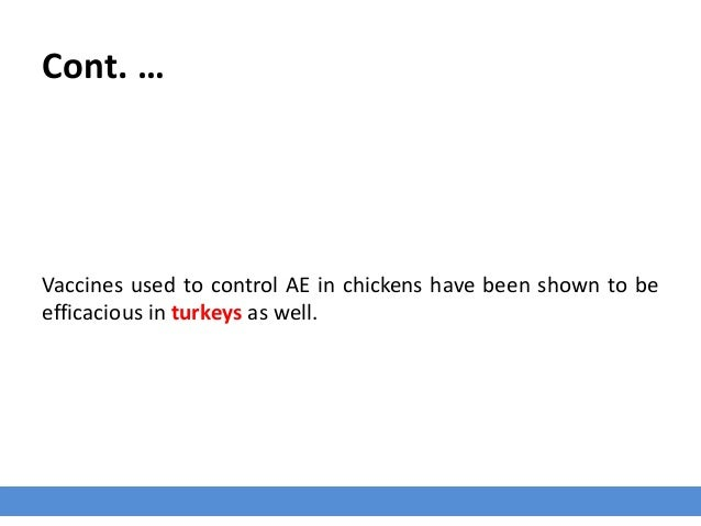 Cont. … Vaccines used to control AE in chickens have been shown to be efficacious in turkeys as well.