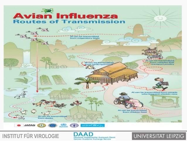 Avian influenza virus and transmission