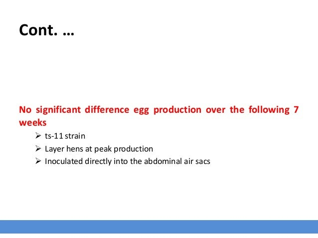 Cont. … No significant difference egg production over the following 7 weeks  ts-11 strain  Layer hens at peak production...