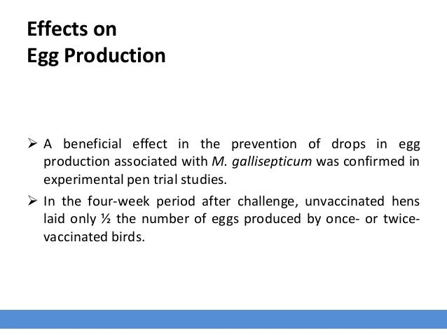 Effects on Egg Production  A beneficial effect in the prevention of drops in egg production associated with M. gallisepti...