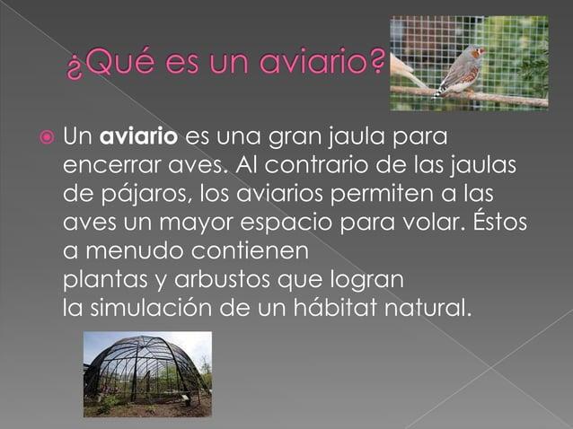  El guacamayo maca (Ara Macao ) es una especie de ave perteneciente a la familia de las psitácidas. Además, es una de las...