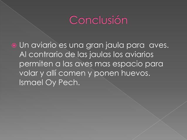 Aviario, Ismael.